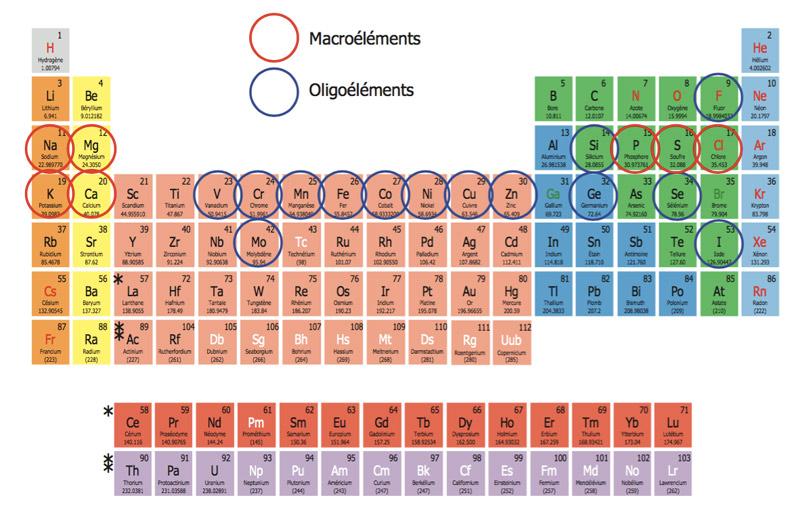De nombreux éléments du tableau périodique sont présents dans la formule de Cellfood